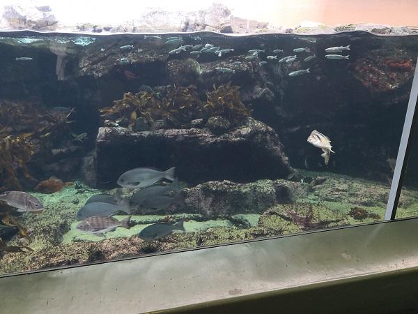 アクアワールド 茨城県大洗水族館